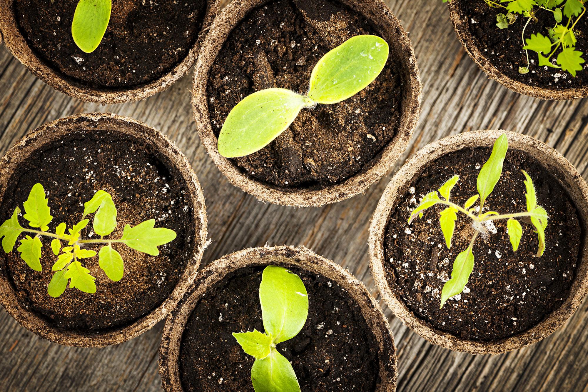 Secteur agricole : facilités de paiement des cotisations sociales étendues