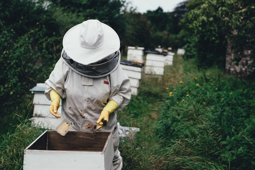 Les abeilles au coeur de l'interdiction de certains pesticides