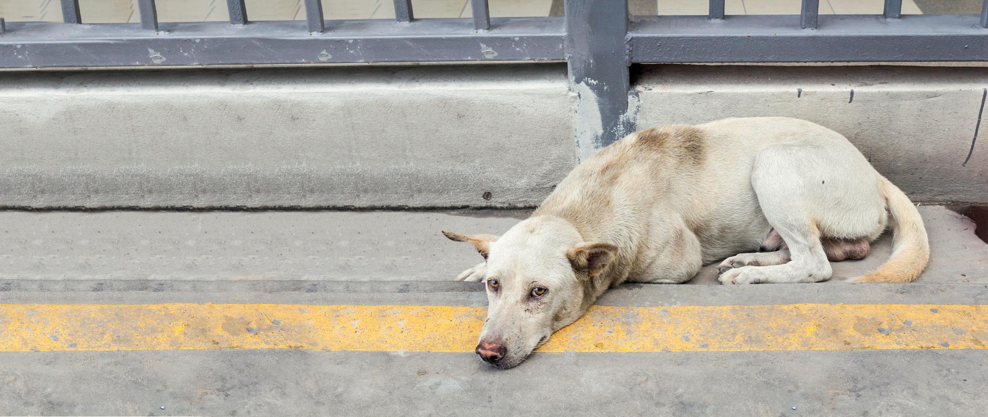 Un Code du bien-être animal pour la journée mondiale des animaux !