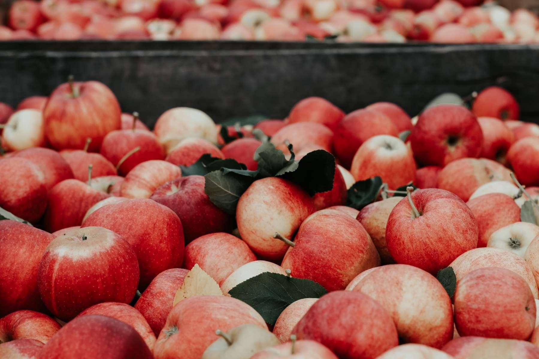 Vers un allongement du travail saisonnier dans la culture fruitière
