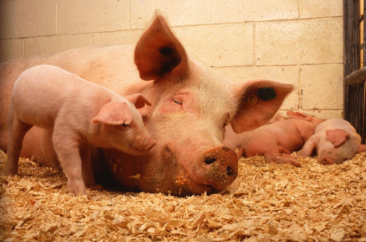 2,4 millions débloqués pour la recherche en santé animale et végétale