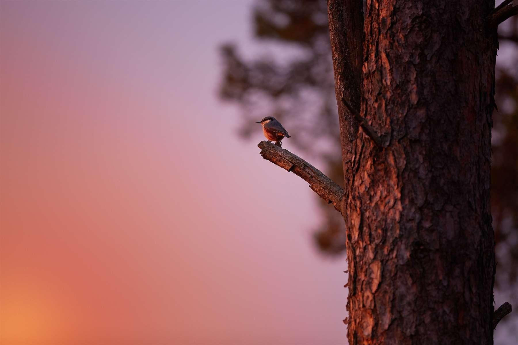 Environnement et Climat: une préoccupation de chaque instant