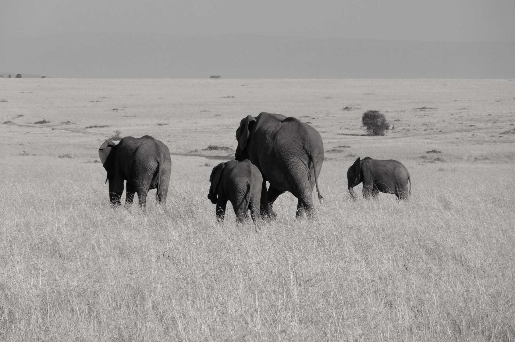 Interdire le commerce de l'ivoire… mais aussi renforcer les contrôles !