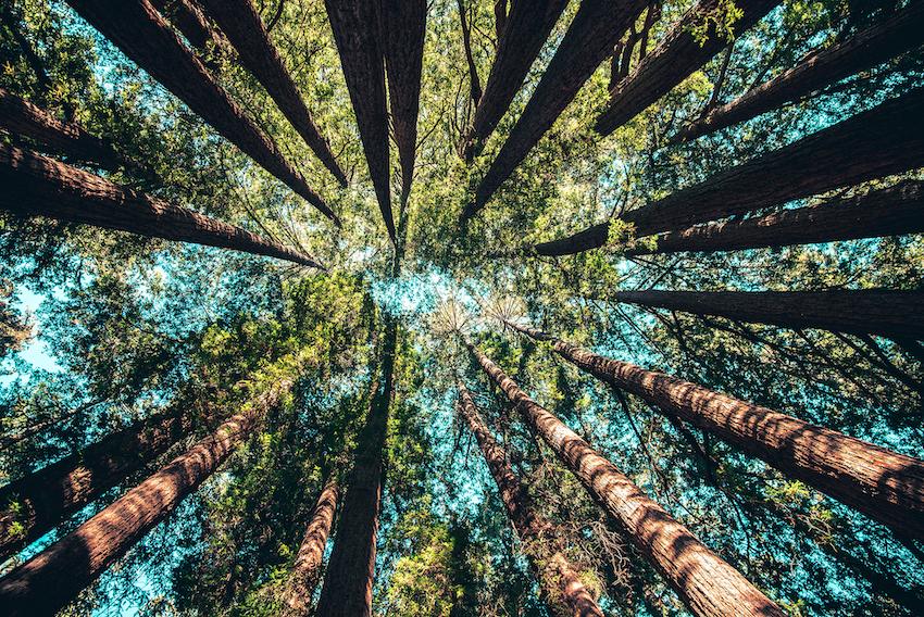 Projet éco-positif: 40 propositions concrètes pour une réponse durable à l'enjeu climatique