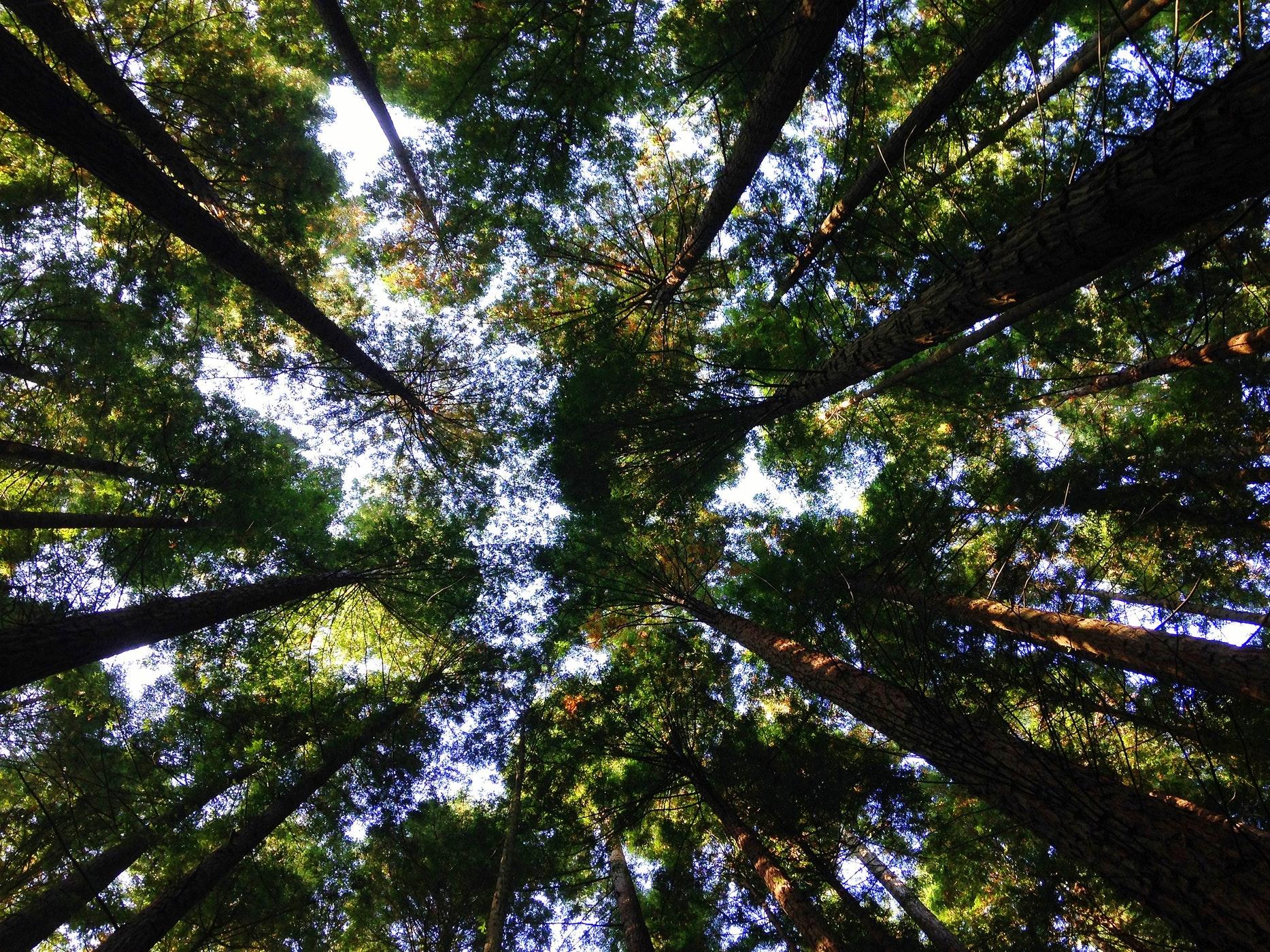 Le MR propose 40 mesures concrètes et chiffrées pour faire face aux enjeux climatiques