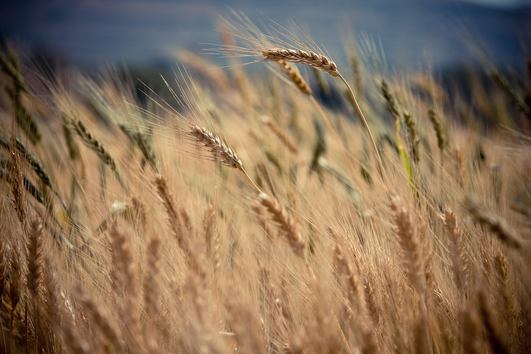 Une subvention pour le projet de Hall Relais Agricole à Braives : Les Halles de Hesbaye