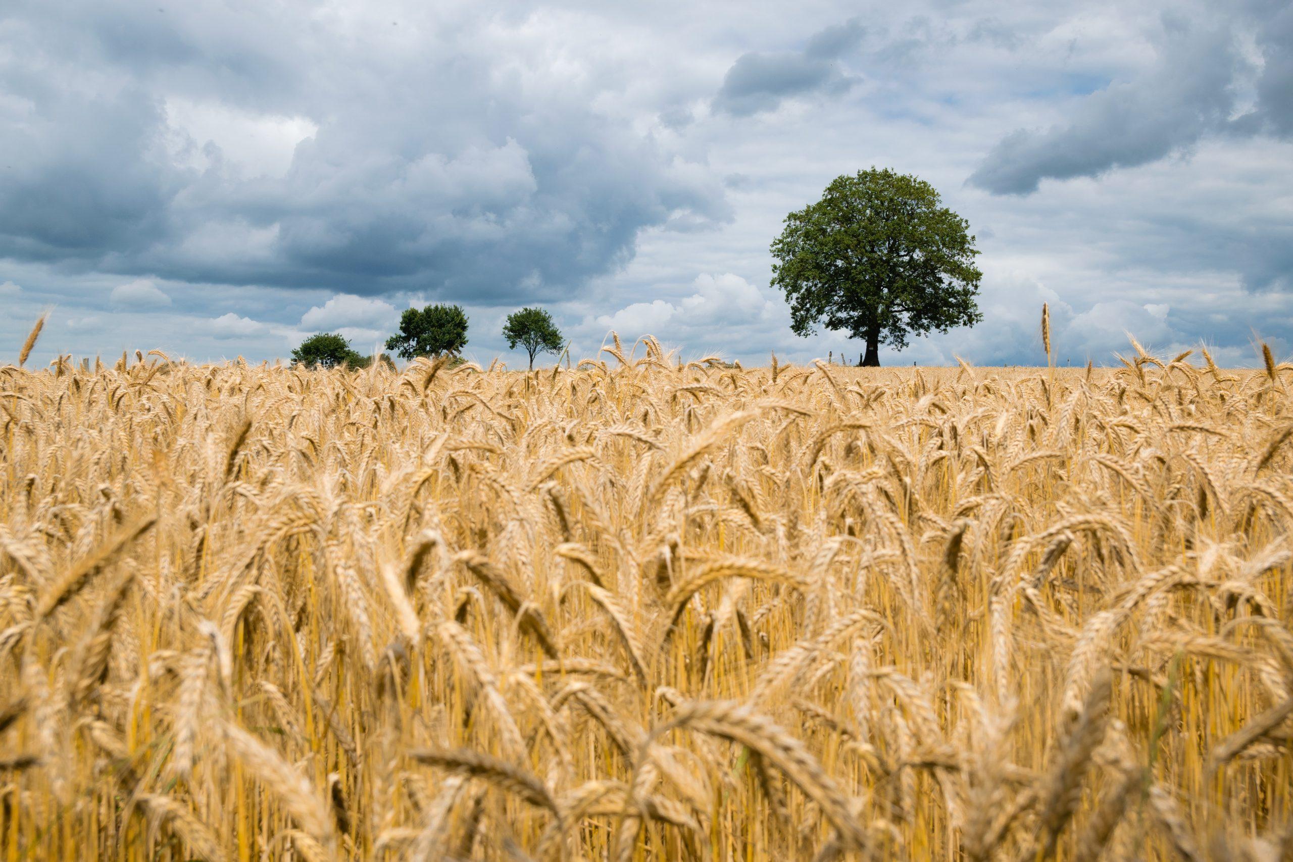 David Clarinval demande à l'Union européenne des règles du jeu équitables dans tous ses accords commerciaux et qu'une attention très particulière soit accordée à l'agriculture