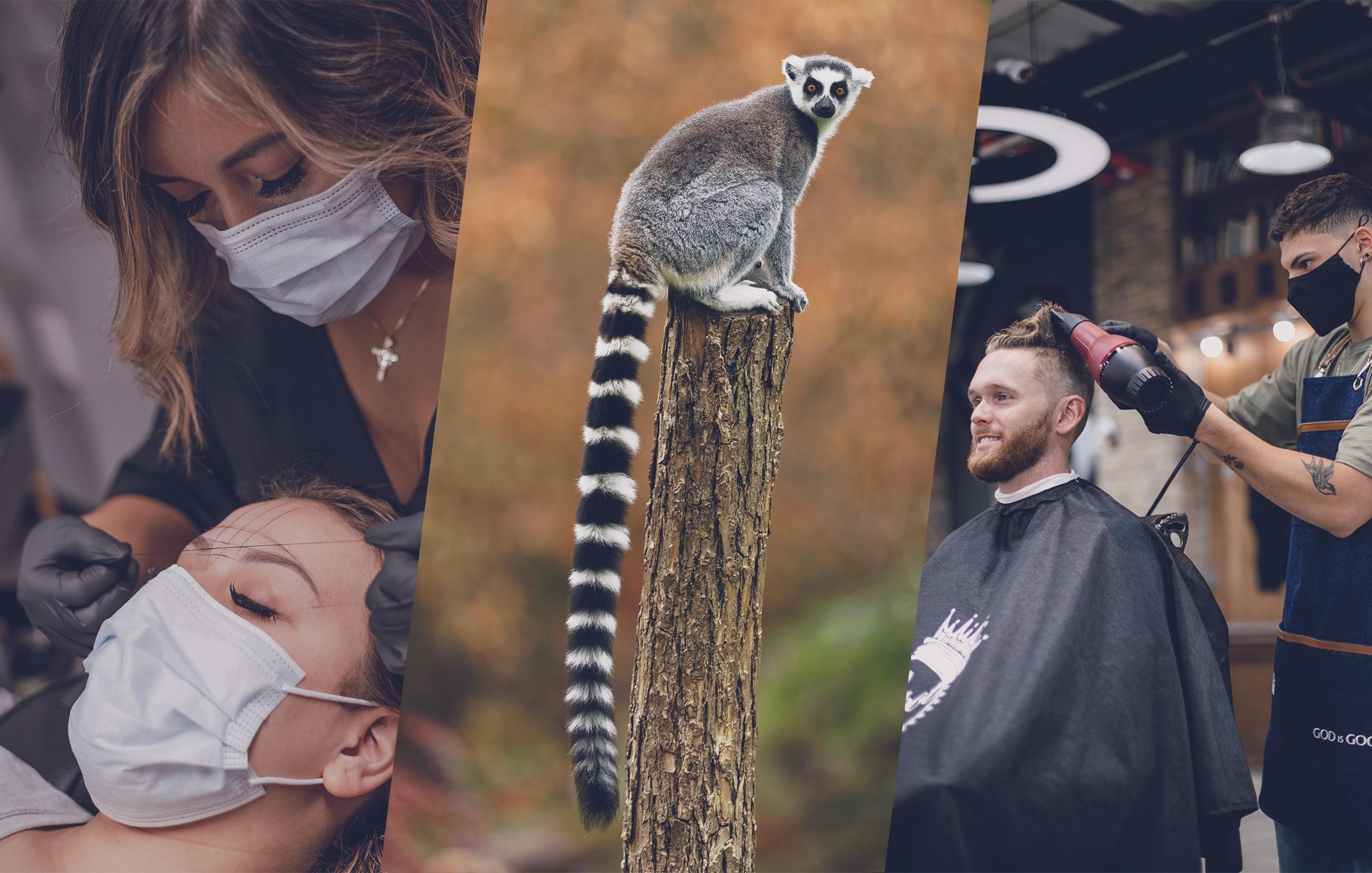 OCC : métiers de contact, campings, parcs animaliers… découvrez les mesures d'assouplissement