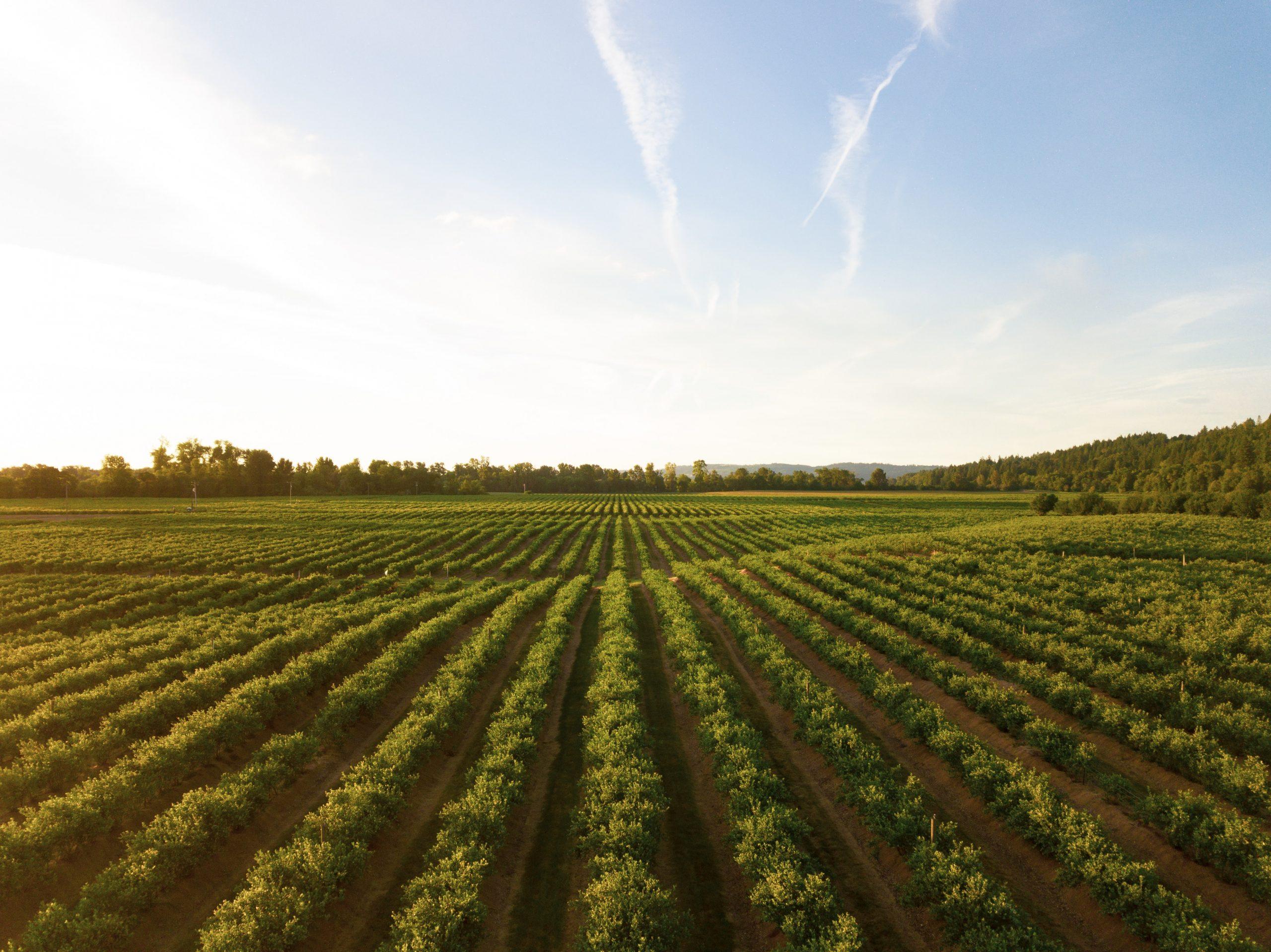 Protégeons le patrimoine immatériel rural et les activités agricoles