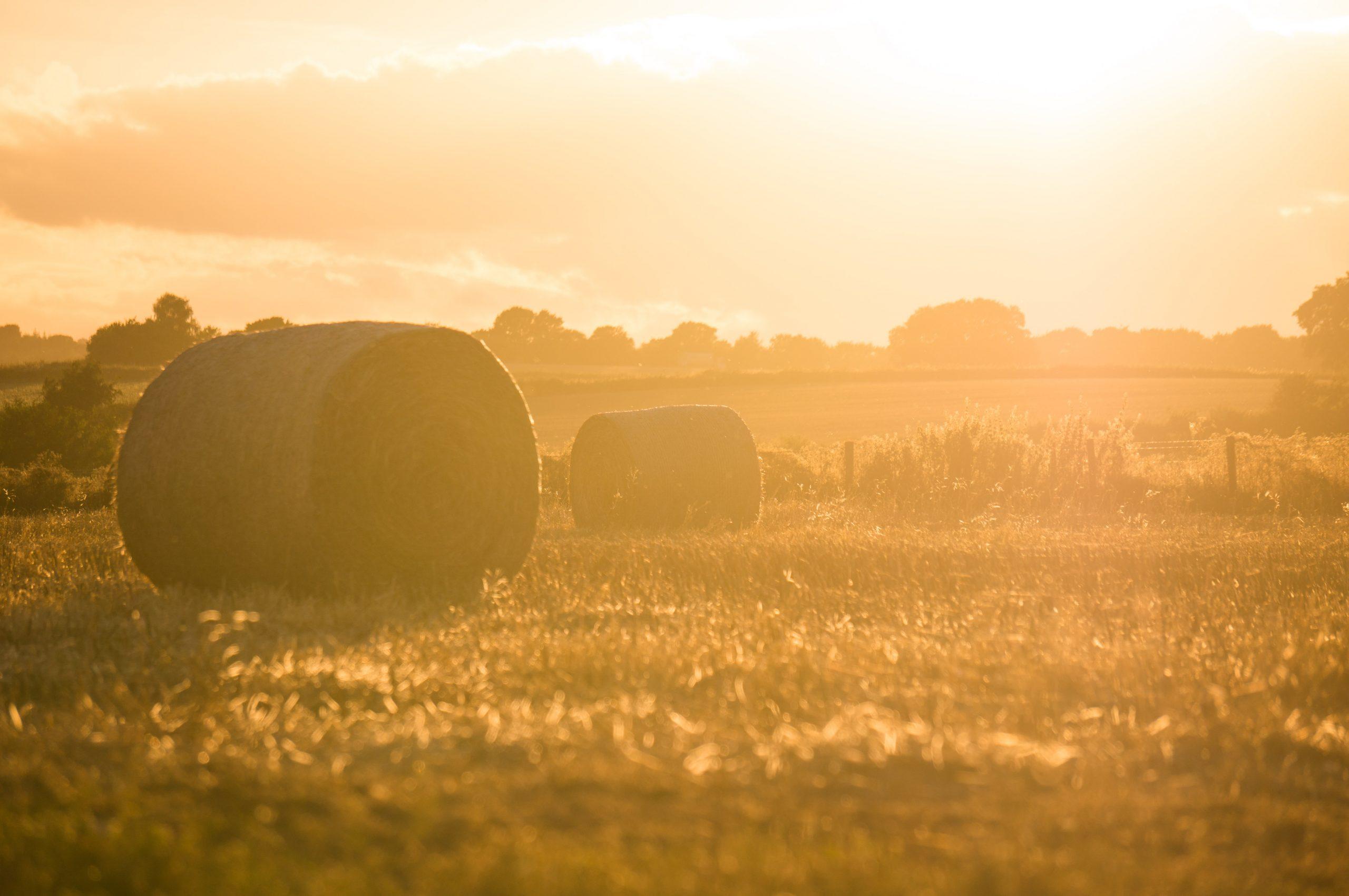 Label « En direct de la ferme », pour permettre l'achat de produits agricoles en vente directe avec des écochèques